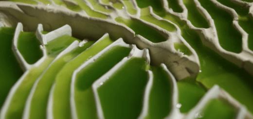 Azulejos cerámicos con algas DIY